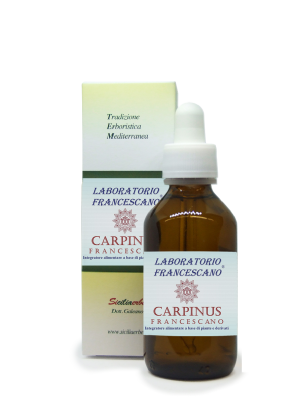 Carpinus Francescano