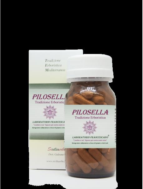 Pilosella